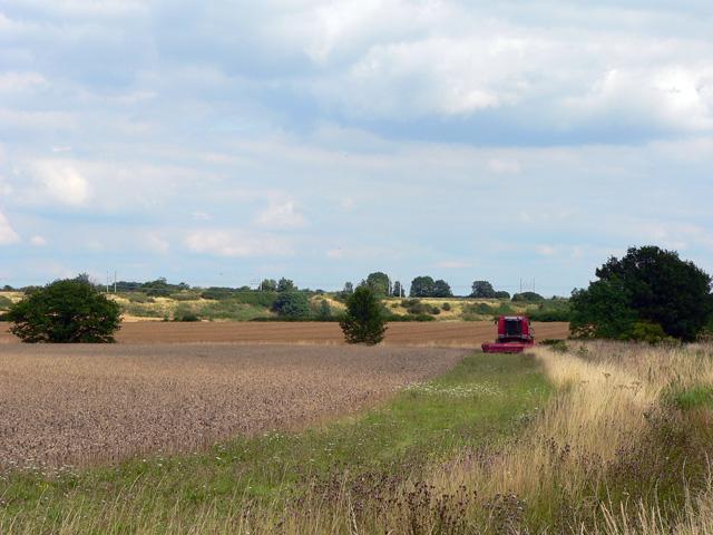 Resting Harvester