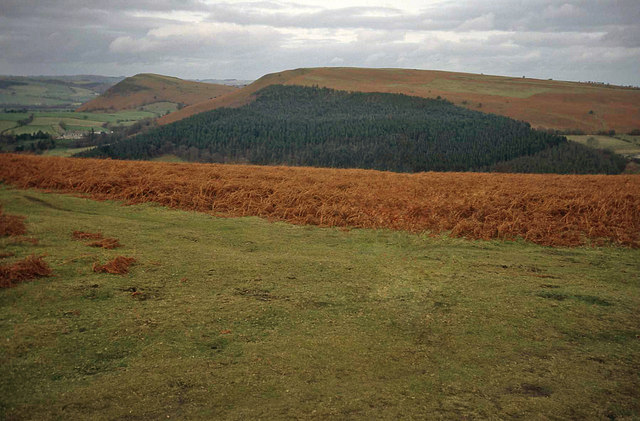 The disused racecourse on the Hergest Ridge