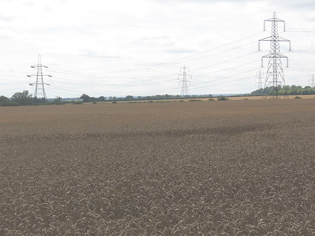 Wheatfield and electricity towers, Gilston