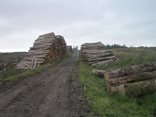 Timber Stack in Belmore Forest