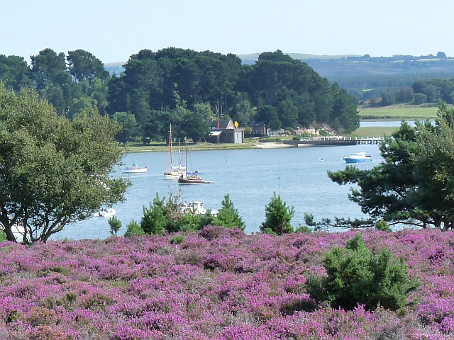 Round Island Poole Harbour 169 Robin Drayton Geograph