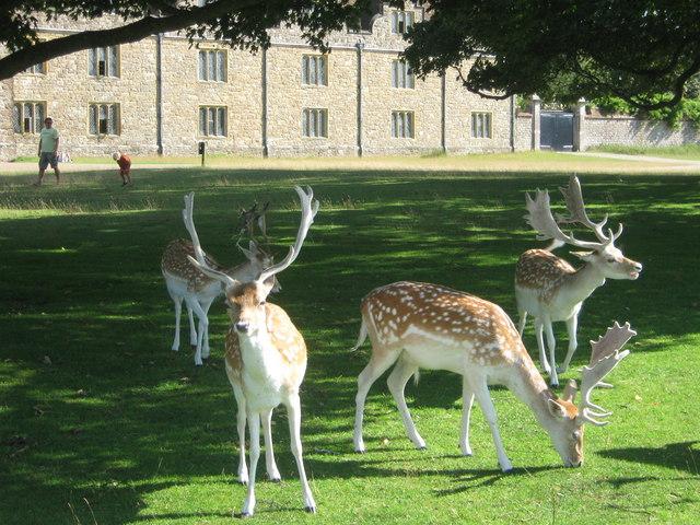 Deer Park Deers Deer in Front of Knole Park