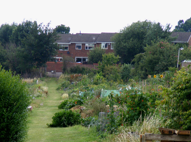 Dellfield Allotments, Berkhamsted