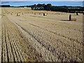 NH6454 : Harvested field beside Balnakyle Farm : Week 34