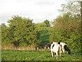 SJ5550 : Spring farmland in evening light by Richard Webb