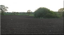 SJ5649 : Small pond in a ploughed field by Richard Webb