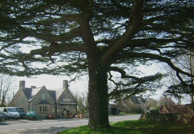 Over Kiddington (Landmark Tree!)