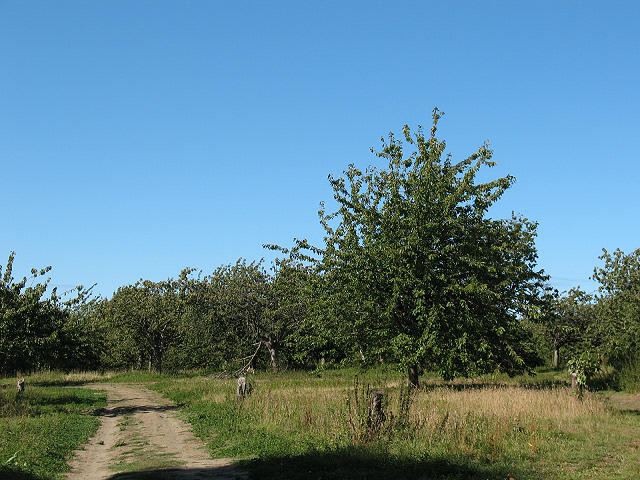 Orchard at Horselees