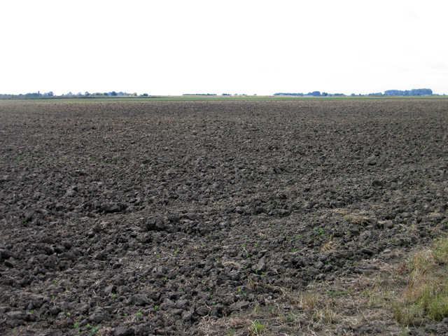 Arable landscape, Moulton Fen, Lincs