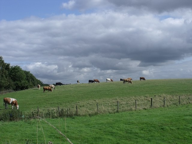 The Bredisholm Bulls