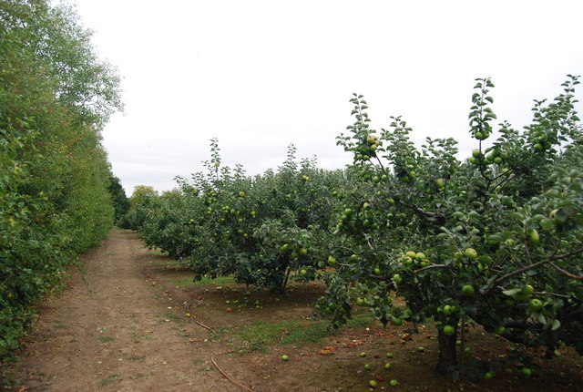 Tunbridge Wells Circular Path passing through orchards