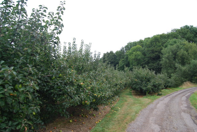 Orchards by the Tunbridge Wells Circular Path