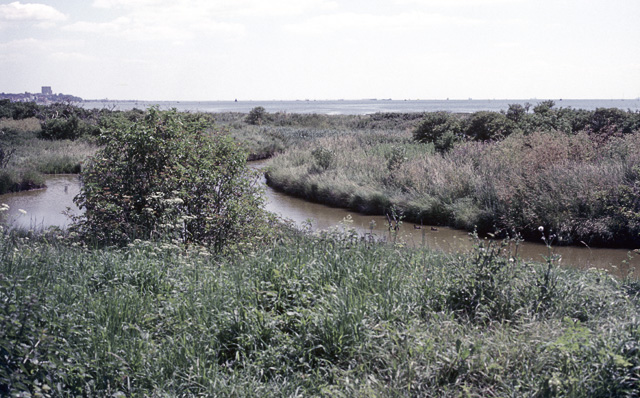 Two-Tree Island, View from Old Hide, 1987