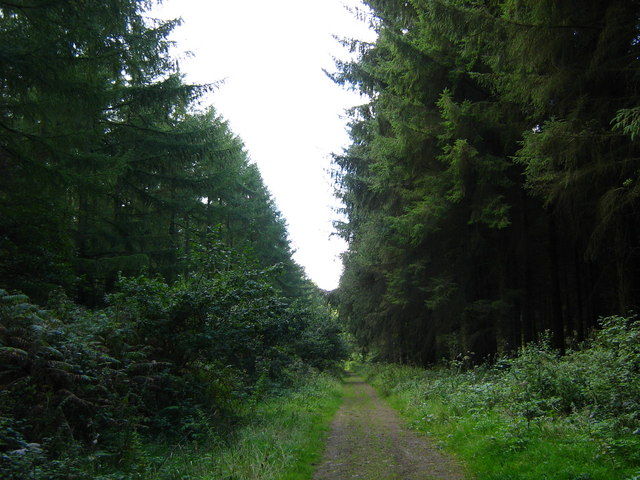 Wentwood forest track