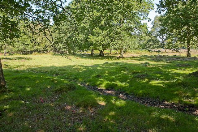 Warwickslade Cutting: a planned meander