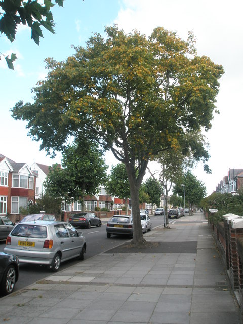 Early signs of autumn in Kirby Road