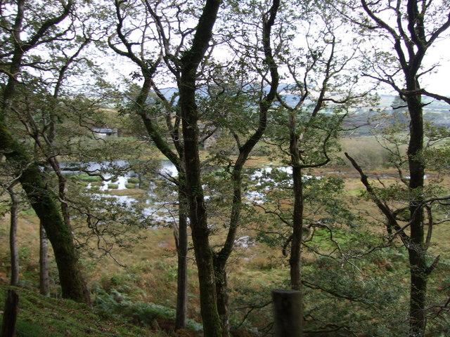 Wetlands at the big loop at Dduallt
