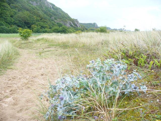Coastal Path, Nicholaston Burrows