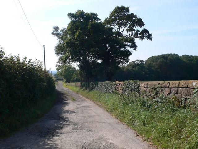 Farm lane leading to Barn Farm, Burton