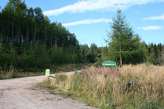 Lumphanan Forest