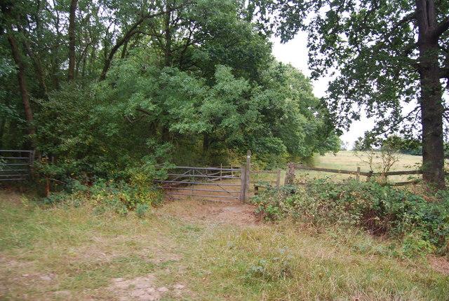 Tunbridge Wells Circular Path, Nghtingale Wood