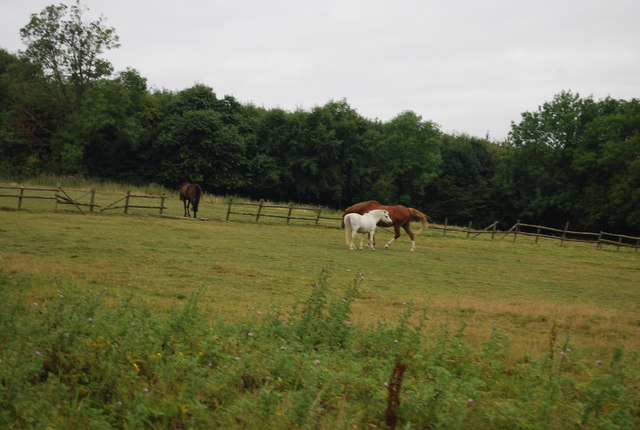 Horses by the Tunbridge Wells Circular Path