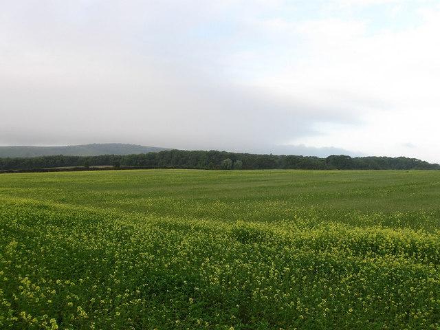 Sandpit Field