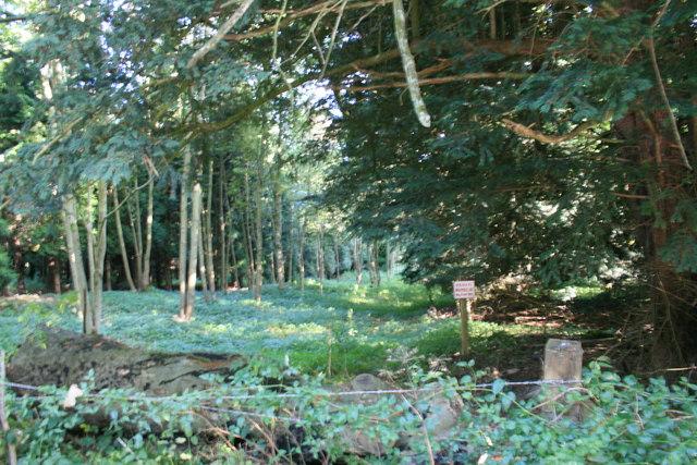 Bradwell Grove woods