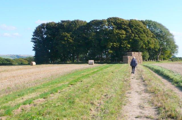 Track and Copse, Gore Hill