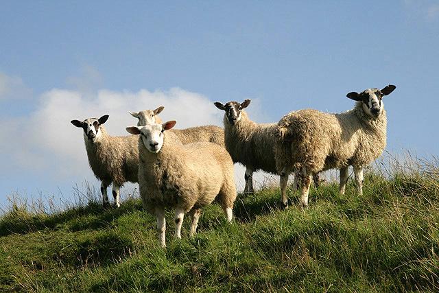 Hi Ewes!