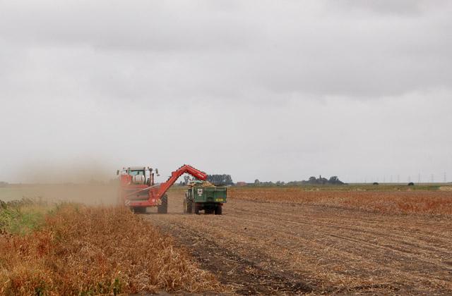 Harvesting potatoes near Martins Farm (2)