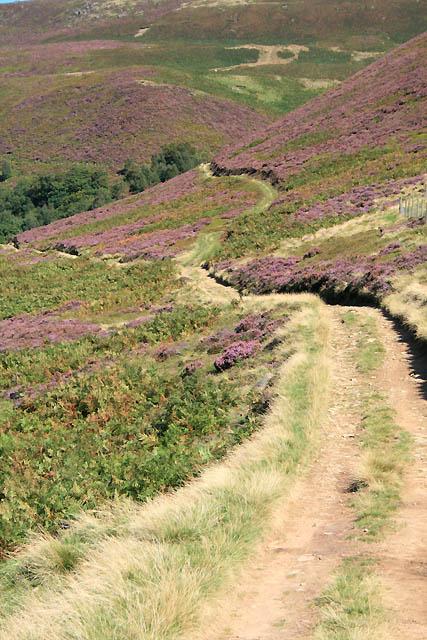 Path along Swine Side