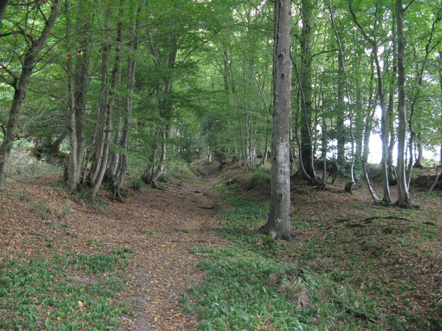 The old Roman Road Stane Street continuing through Plattershill Copse