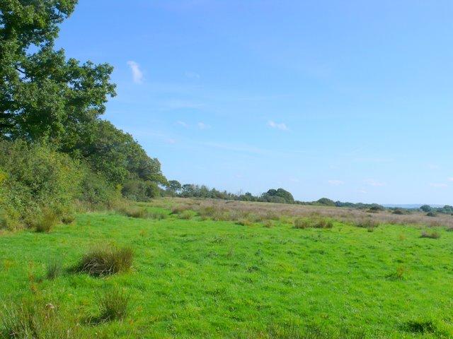 Bridle Path near Holnest
