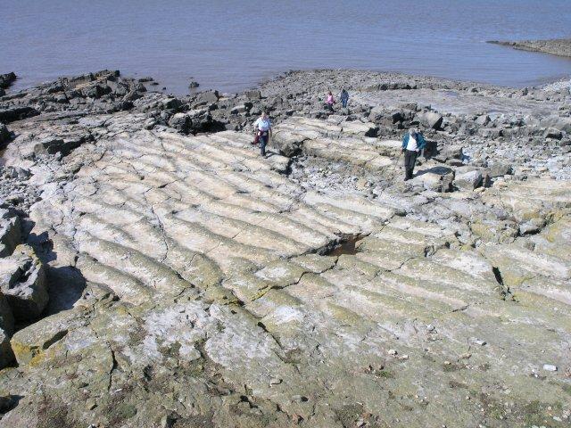 Fossilised ripple marks in sea rock