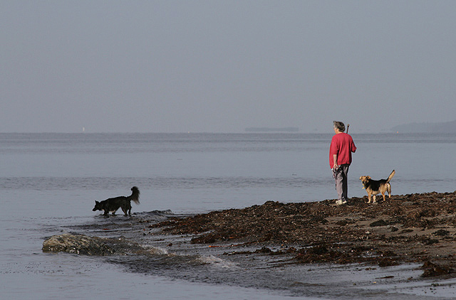 A walker and dogs at Carleton Bay
