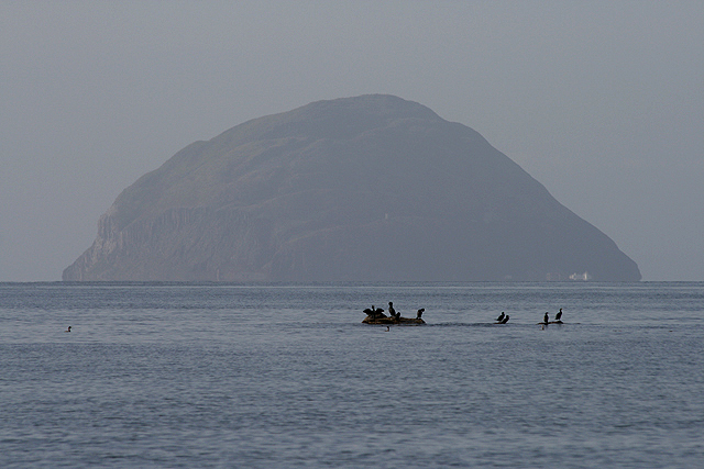 Cormorants in the Firth of Clyde