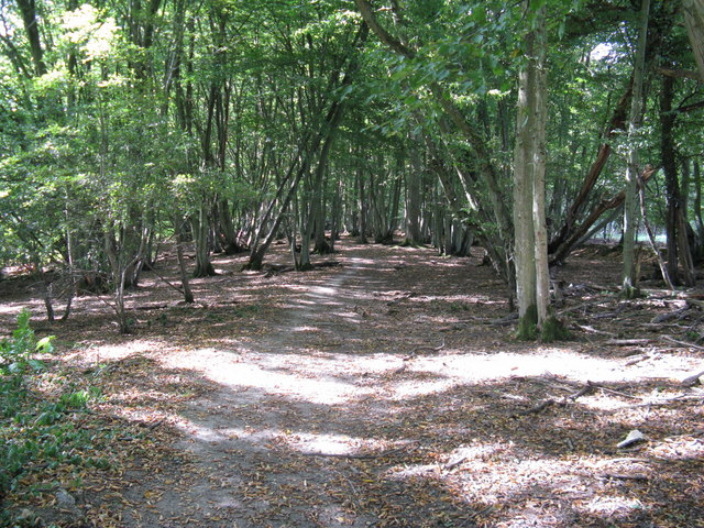 Footpath in Roman Woods