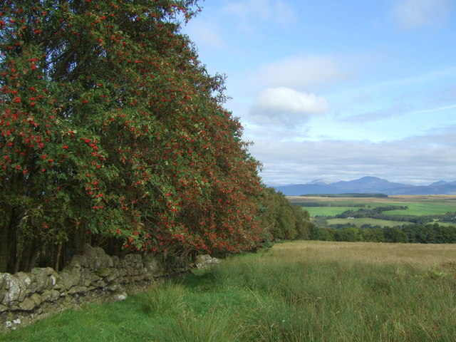 Millstone Wood