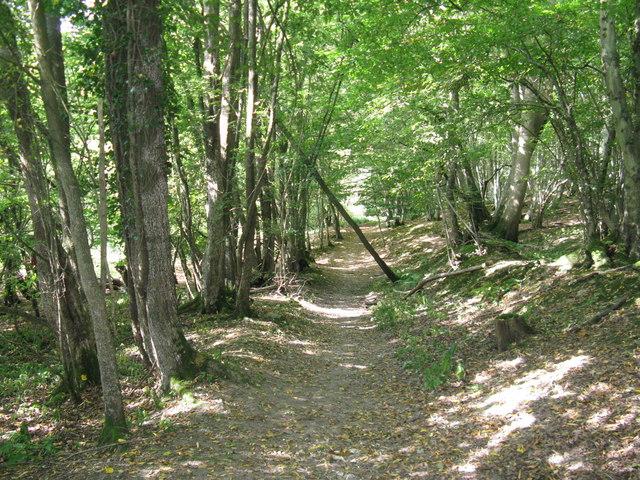 Footpath through woods near fishing lakes