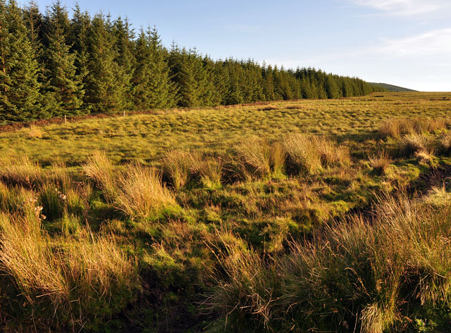 Edge of the forest at Standingstone Hill