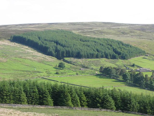 Plantation above Risegreen