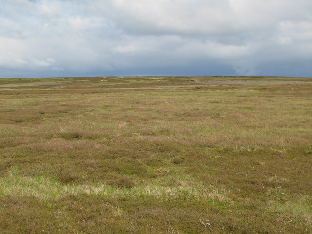 Moorland north of Shorngate Cross (2)