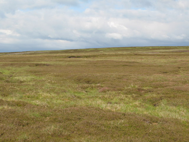 Moorland north of Shorngate Cross (3)