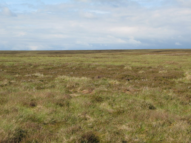 Moorland north of Shorngate Cross (5)