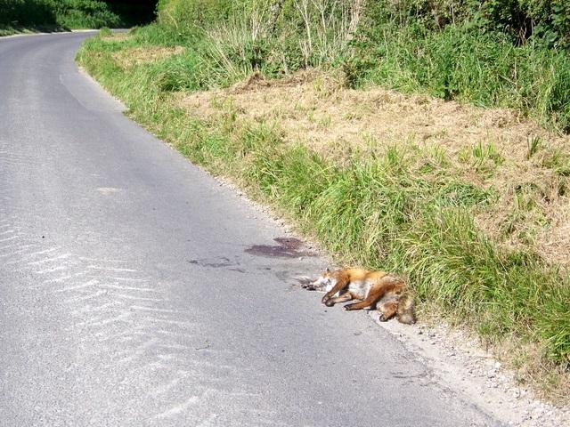 Road kill, Turnworth