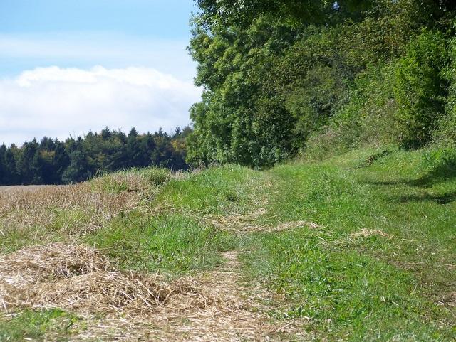 Bridleway near Winterborne Clenston