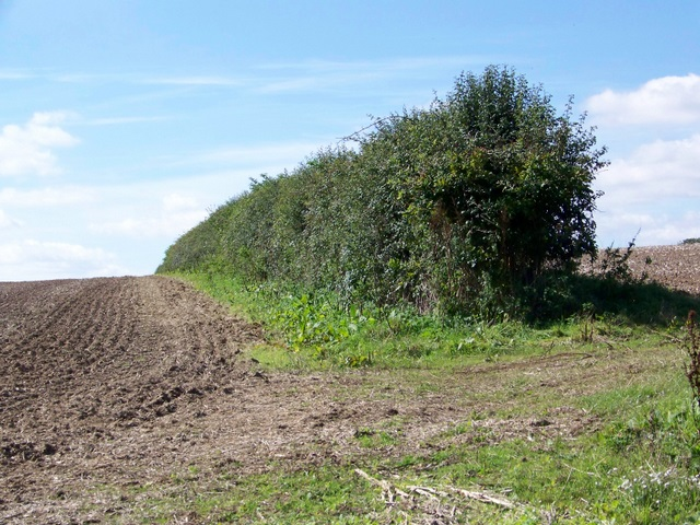 Hedge and fields, Lower Street