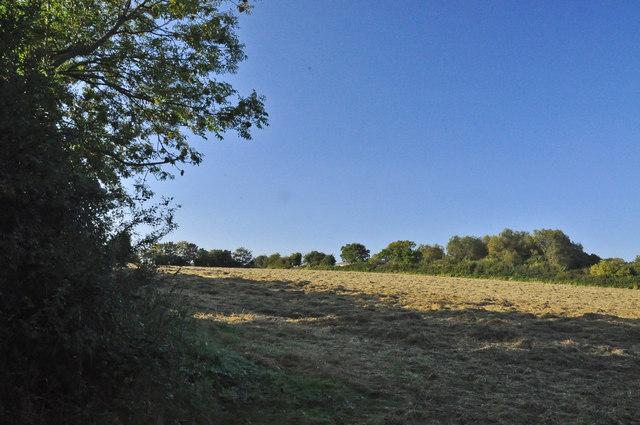 Freshly mown hay - Murch
