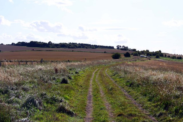 The Ridgeway by Yew Down